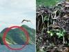 Hòn đảo nguy hiểm bậc nhất thế giới, cấm con người đặt chân lên tại Brazil: 1 mét vuông 5 con rắn