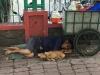 Nghẹn ngào hình ảnh chú chó nằm ngủ ngon lành bên người chủ nghèo trên vỉa hè sau những giờ mưu sinh vất vả