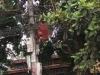 Công nhân tử nạn thương tâm trên cột điện: Chưa thể khẳng định chết do bị điện giật