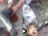 Nhóm thanh niên phát trực tiếp cảnh giết khỉ lấy óc ăn sống gây phẫn nộ cộng đồng mạng