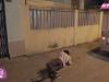 'Gạo nếp gạo tẻ': Hân vẫn chưa thoát khỏi vòng lao lý, xem cảnh ông Vương làm điều này cho con mà thấy xót xa!