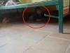 Hình ảnh bé trai sợ hãi trốn dưới gầm giường, không dám khóc trong khu cách ly khiến nhiều người xót xa