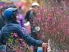 Dự báo thời tiết ngày 30 Tết (24/1): Miền Bắc đón Giao thừa trong mưa rét