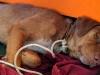 Giải cứu chú chó bơi hơn 200km giữa đại dương