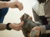 2 thú cưng đầu tiên tại Mỹ nhiễm Covid-19