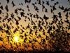 Kỳ lạ ngôi làng thu hút hàng ngàn con chim đến quyên sinh mỗi năm