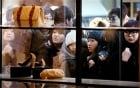 """Trung Quốc dùng """"lợn bay"""" mua vui cho khách du lịch 5"""