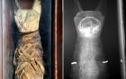 Phát hiện mèo nhồi bông hóa ra là một... xác ướp 2000 năm tuổi