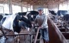 Nông dân thu lãi 3 tỷ mỗi năm nhờ trang trại gà 7