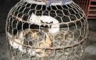 """Vụ 3 tấn mèo bị tiêu hủy: """"Không có chuyện hàng nghìn con mèo bị nghiền đến chết"""" 6"""