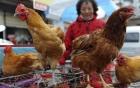 Cúm gia cầm tại Trung Quốc: 6 người thiệt mạng, 14 người nhiễm