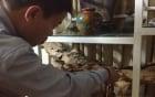 Bạch kỳ nam nghìn tỉ đại gia Việt vung tiền săn lùng 6