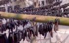 Thương lái Trung Quốc thu mua đỉa, lá điều khô để làm gì?