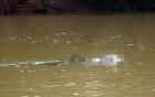 Nóng từ địa phương ngày 18/6: Thanh Hóa - Phát hiện thi thể cụ bà trôi trên sông