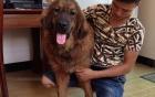 Dân chơi chi trăm triệu sang TQ mua chó có giấy khai sinh