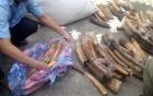 Hàng tấn ngà voi giấu trong ruột gỗ nhập từ châu Phi về Sài Gòn 3