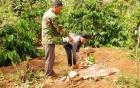 Hoang mang vụ thi thể hai bé sơ sinh bị bỏ rơi trong chùa 7
