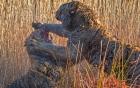 Mãnh hổ tử chiến quyết liệt giành lãnh thổ và bạn tình
