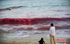 Ngỡ ngàng xem thủy triều đỏ xuất hiện ở bãi biển Trung Quốc