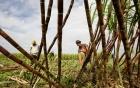 Gã công nhân trồng mía chém chết người vô cớ