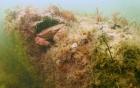 Khu rừng tiền sử 10.000 năm dưới biển được phát hiện