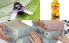 Ngoài ruồi, sản phẩm của Tân Hiệp Phát từng có cả gián 7