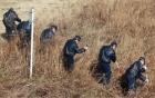 Nhật bắt nghi phạm nghi giết người theo kiểu IS