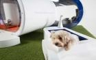 Nhà thông minh cho... chó giá 30 nghìn USD