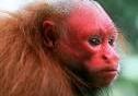Những loài động vật kỳ dị còn tồn tại trên thế giới