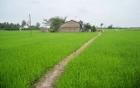 Phát hiện một thanh niên gục chết bên ruộng lúa với nhiều vết thương ở cổ