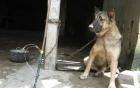 Bắt giữ 2 đối tượng trộm chó bằng súng bắn điện tự chế 2