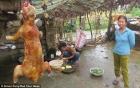 Chủ quán Bắc Ninh giết 30 con mèo mỗi ngày lên báo Anh