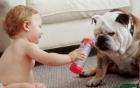 Clip: Những pha hài hước vô đối của trẻ em và những chú chó ngộ nghĩnh