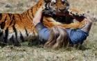 Nỗi kinh hoàng từ những vụ động vật tấn công con người