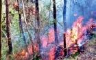 Hàng chục ha rừng cháy dữ dội dưới trời nóng 40 độ C tại Thanh Hóa