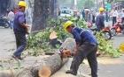 Sự thật sau bức ảnh công nhân tưới cây dưới trời mưa gây tranh cãi 3