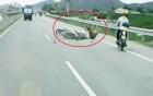 Xe máy đâm vào bò trên đường quốc lộ, cả 2 ngã nhào