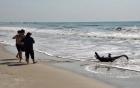 Đang tắm, chạy tán loạn vì cá sấu 2m trườn lên bờ