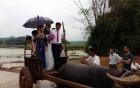 Chùm ảnh rước dâu bằng xe trâu trong ngày lũ ở Thanh Hóa