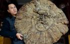 Vì sao nấm linh chi Thái Sơn giá 22 nghìn tỷ/25kg