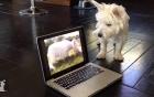 Công nghệ và thú cưng: Mối thù không đội trời chung