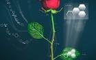Tạo ra hoa hồng điện tử đầu tiên trên thế giới