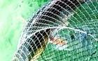 Bắt được cá Sủ vàng quý hiểm ở Quảng Bình