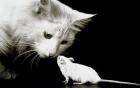 Những con chuột