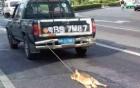Trung Quốc: Phẫn nộ chú chó bị xe tải kéo lê đến chết trên đường phố