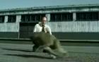 Khỉ láu cá, giả chết cướp ô tô