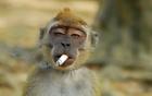 Những con khỉ xấu tính chưa từng thấy
