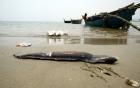 Hội Nghề cá đề nghị làm rõ số lượng ống xả thải ra vùng biển Kỳ Anh 4