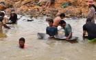 Hàng trăm người đổ xô tìm vàng trên sông Pô Kô