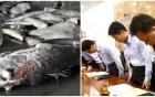 Không thể lợi dụng sự cố cá chết để kích động chống phá đất nước 4